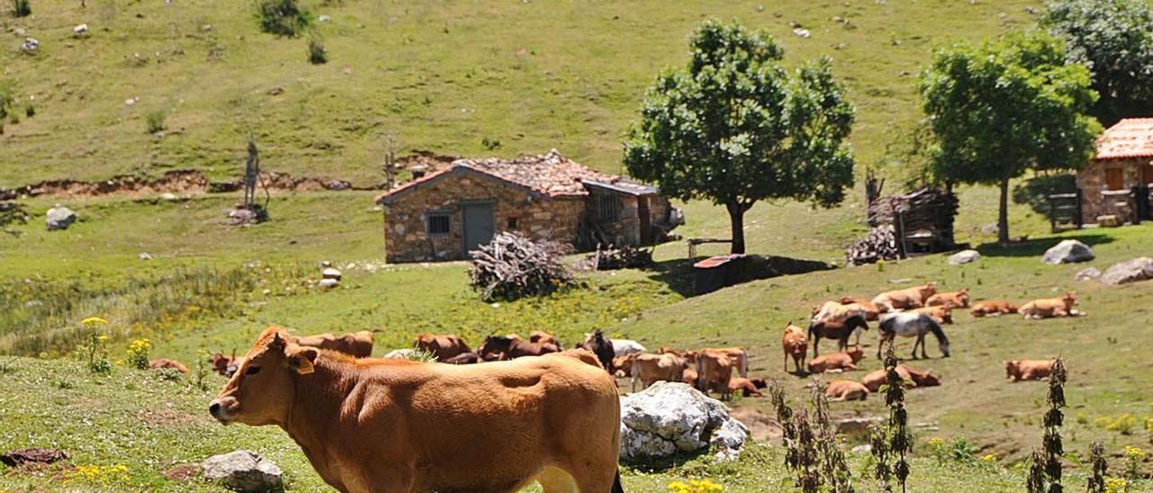Vacas pastando en el puerto de San Isidro.