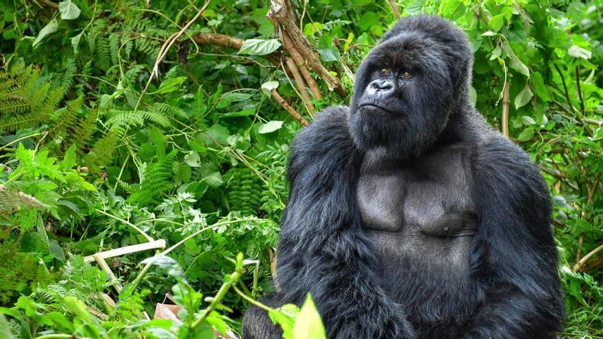 Descubierto un segundo linaje de primates que habitó el Nuevo Mundo