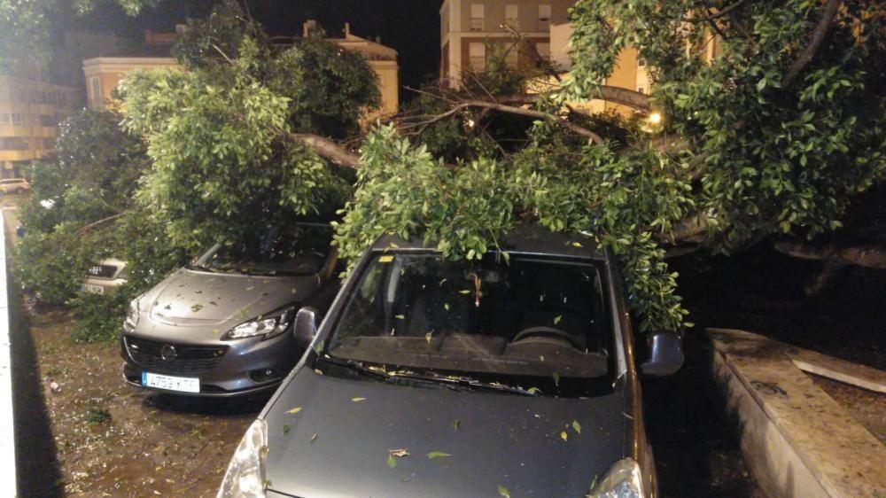 Noche intensa para los bomberos de Málaga capital, que han tenido que acudir por la caída de árboles, ramas e incluso un cable de alta tensión en La Araña.