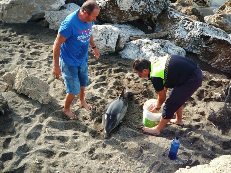 El CREMA rescata a un joven delfín varado en Chilches