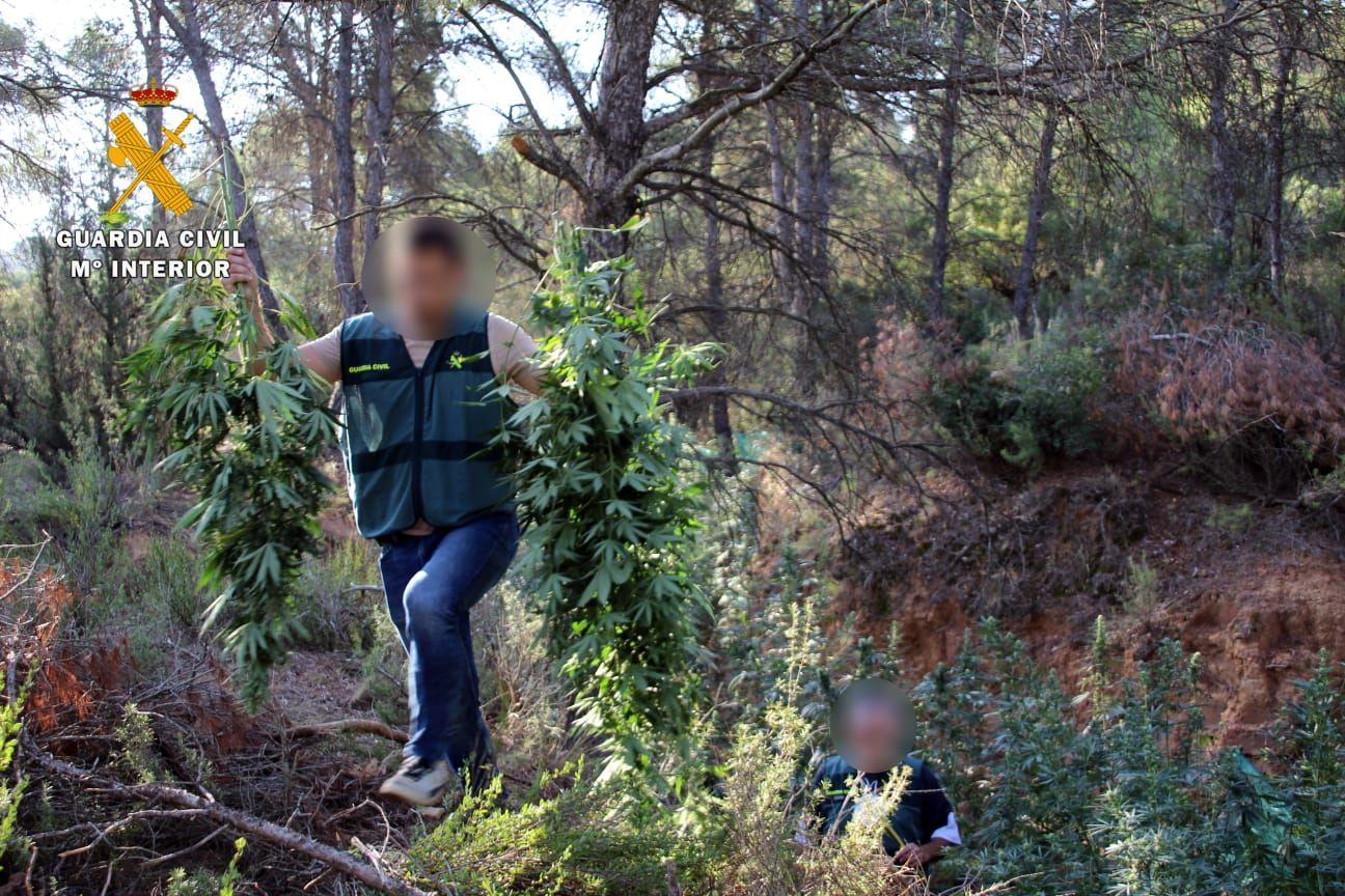 FOTOGALERÍA | Desmantelada una plantación de marihuana en Mequinenza