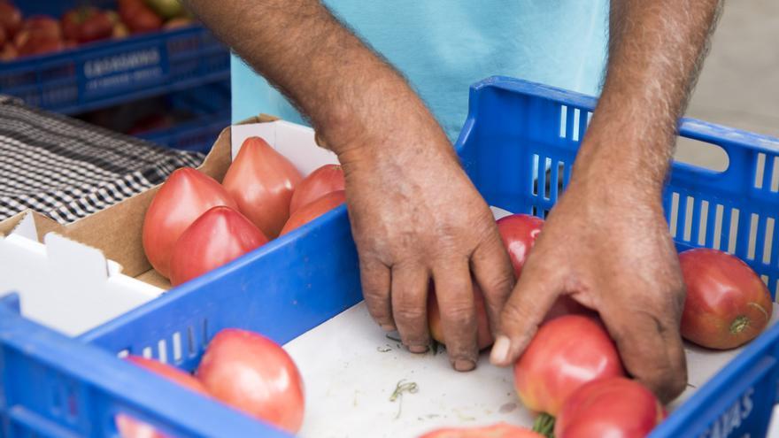 La cinquena Festa del tomàquet se celebrarà del 19 al 24 de juliol
