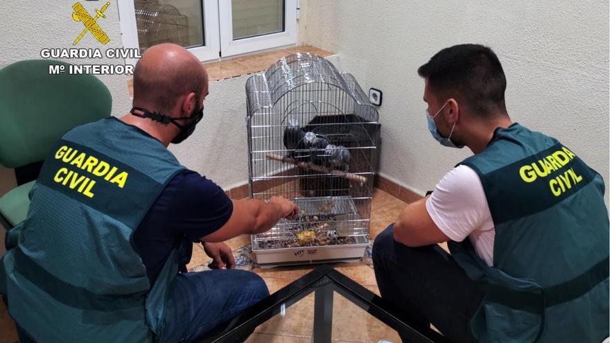 Detenidos por robar 14 aves exóticas en Totana y Molina