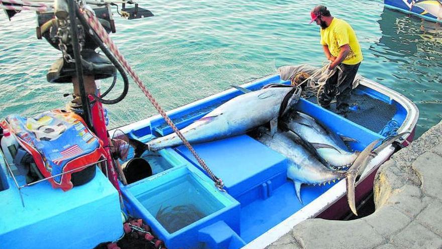 La flota pesquera de Canarias cierra la peor zafra de atún de la historia