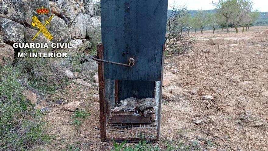 Investigan a una persona por colocar jaulas para cazar gatos domésticos en Teruel