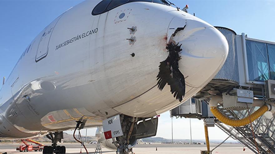 Así aterrizó un avión con un buitre empotrado en su morro