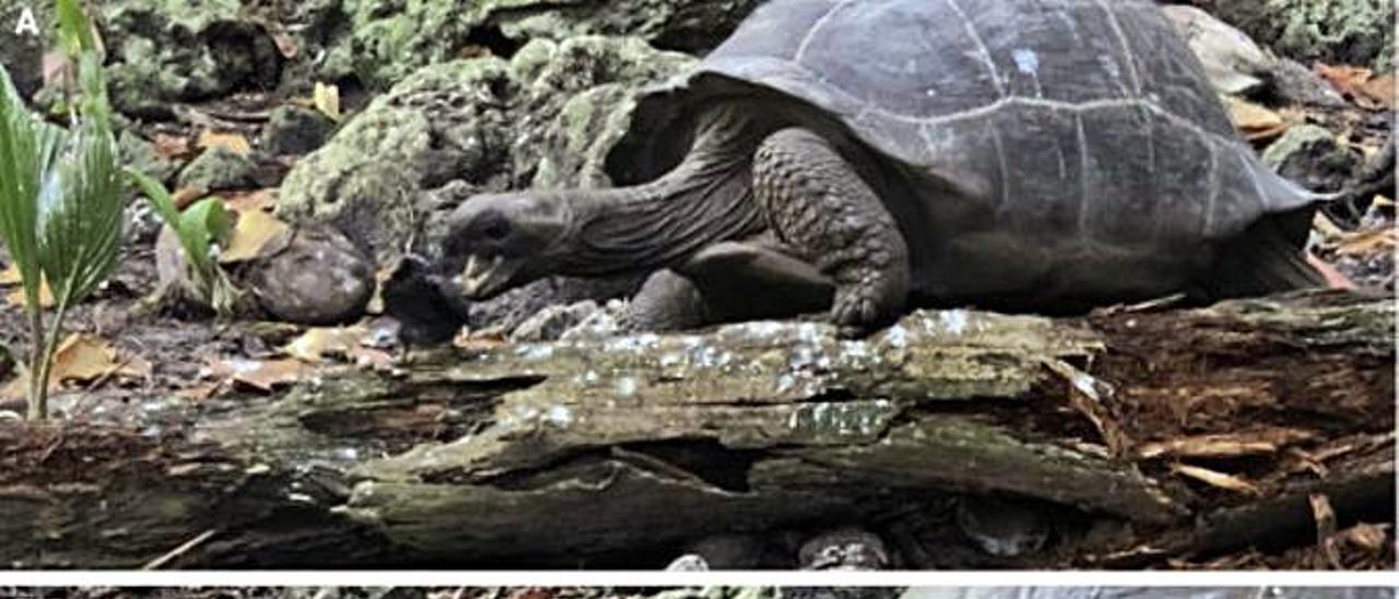 La tortuga cazadora.