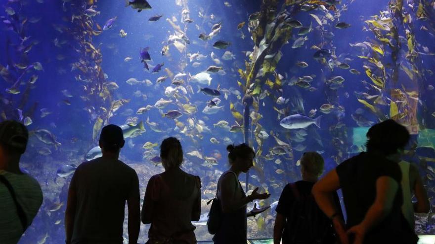 El Oceanogràfic reabre sus puertas el 1 de julio con promociones especiales