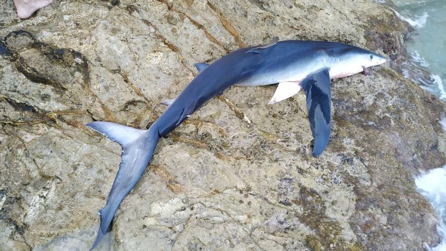 """El  """"tiburón asesino"""" que hizo huir a """"bañistas aterrorizados"""" de la playa de Benidorm"""