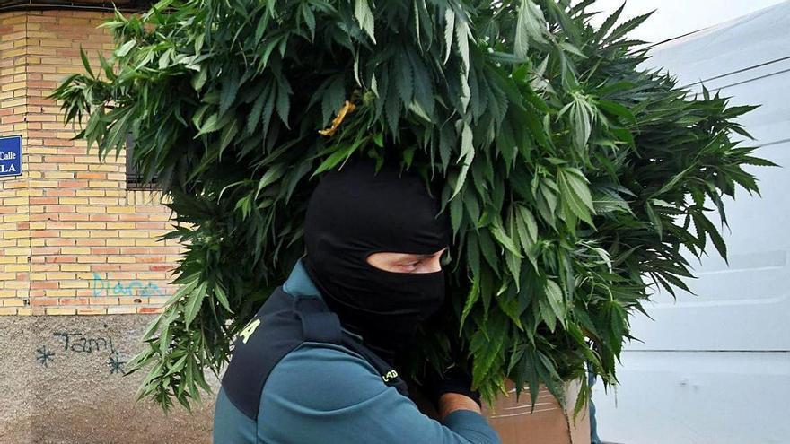 La Región, la segunda comunidad de España con más consumidores habituales de cannabis