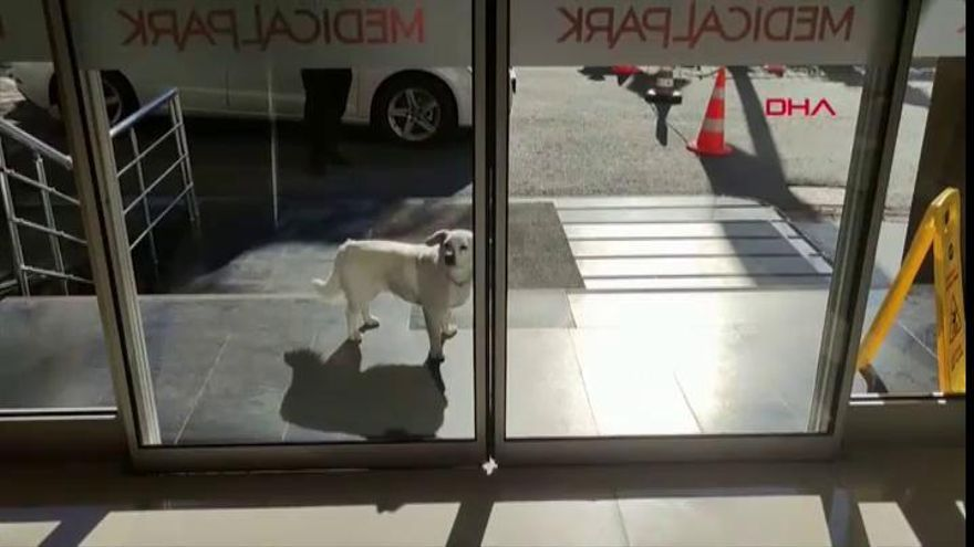Una perra espera a su dueño una semana en la puerta de un hospital turco
