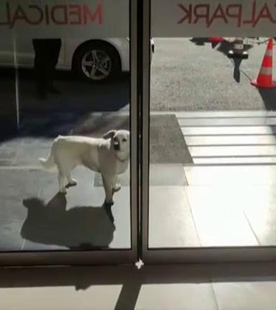 Una perra espera a su dueño durante una semana frente a un hospital en Turquía