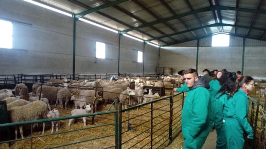 El centro del medio rural de Moraleja formará en ganadería y en el sector agropecuario