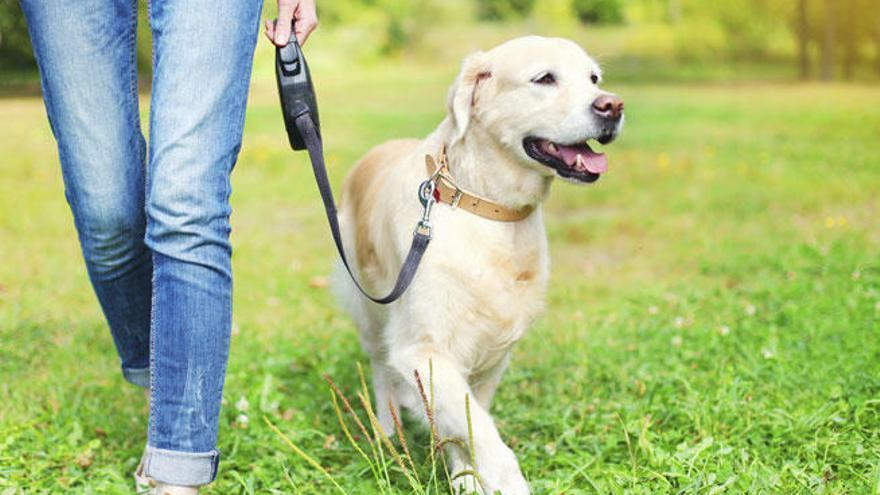 ¿Cómo adiestrar a mi perro? Consejos básicos de educación canina