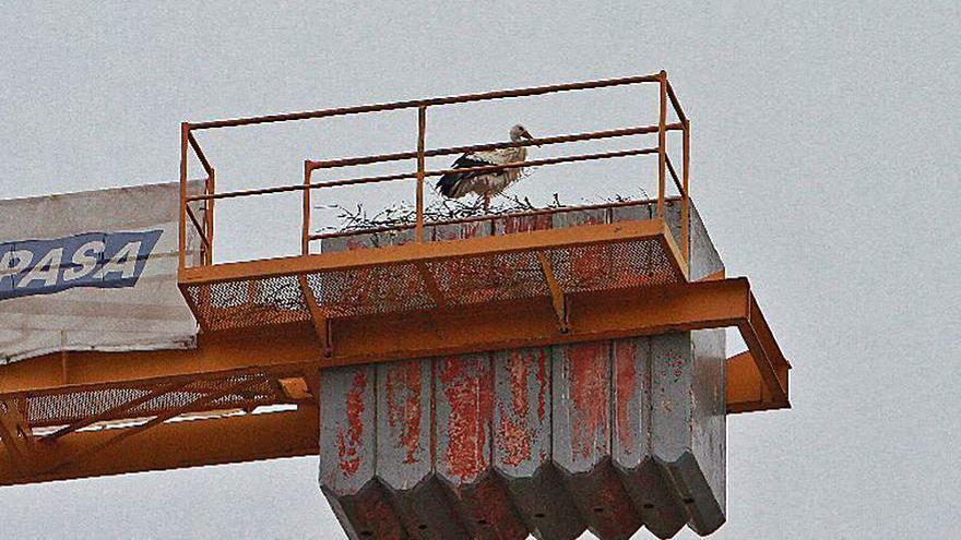 Alertan de un nuevo nido de cigüeñas en una grúa