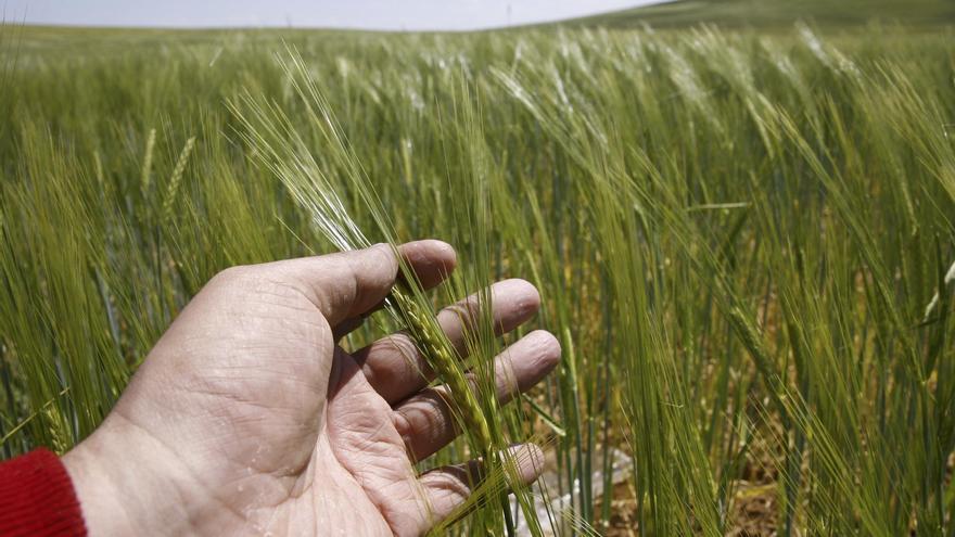 Un grano en el granero