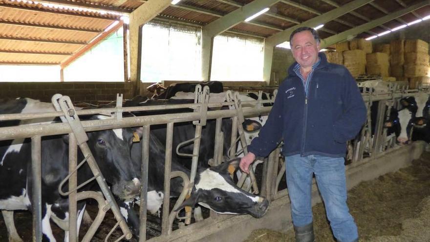 Los ganaderos de leche piden una fórmula rápida para dar salida a los terneros