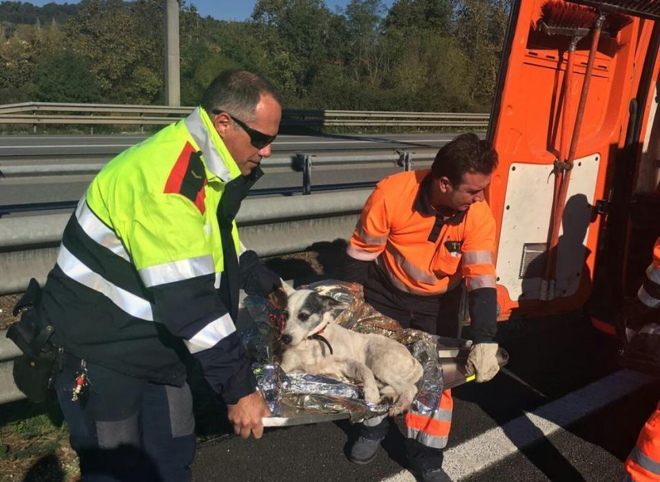 """Un agent dels Mossos i un tècnic del servei de manteniment d'autopistes traslladen el """"Paco"""" sobre un senyal"""