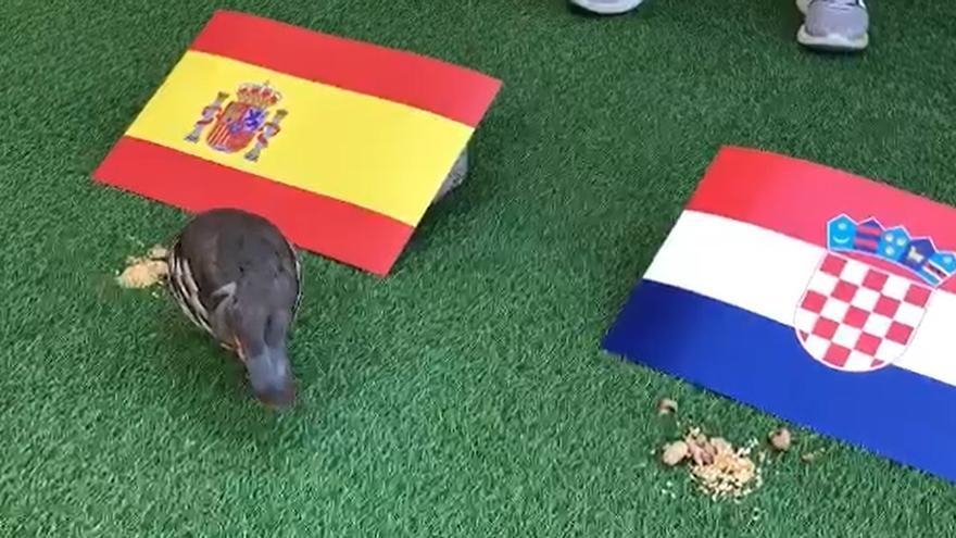 Tako lo vuelve a hacer: vaticina la victoria de la selección española ante Croacia