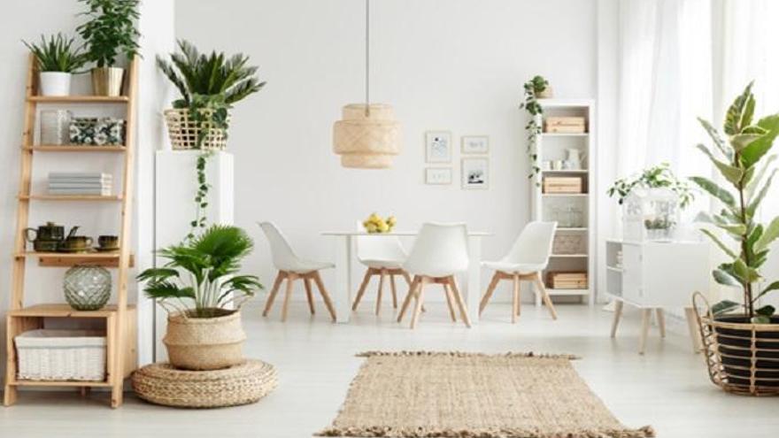 Plantas de interior para alegrar tu hogar en otoño