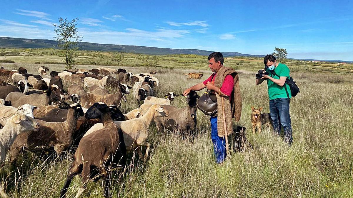 Sabinín y sus ovejas en el rodaje de un documental para la asociación de la capa alistana.   Chany Sebastián