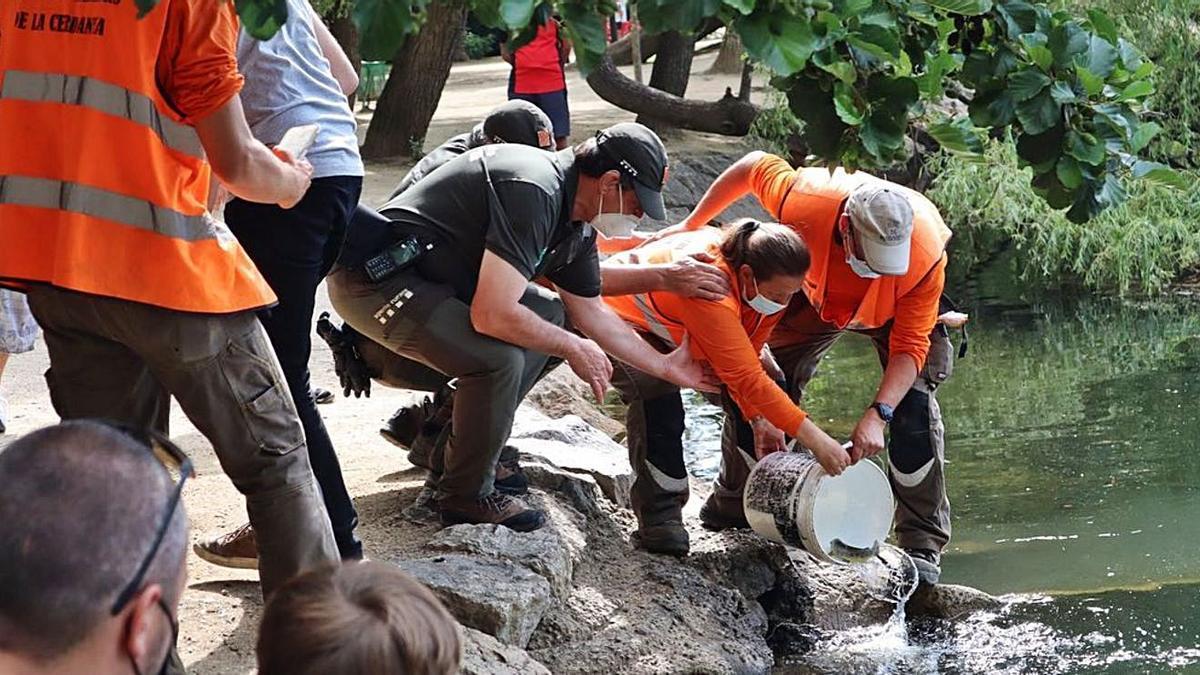 L'operació d'alliberament de les truites amb els agents rurals a l'estany de Puigcerdà | AJ. PUIGCERDÀ