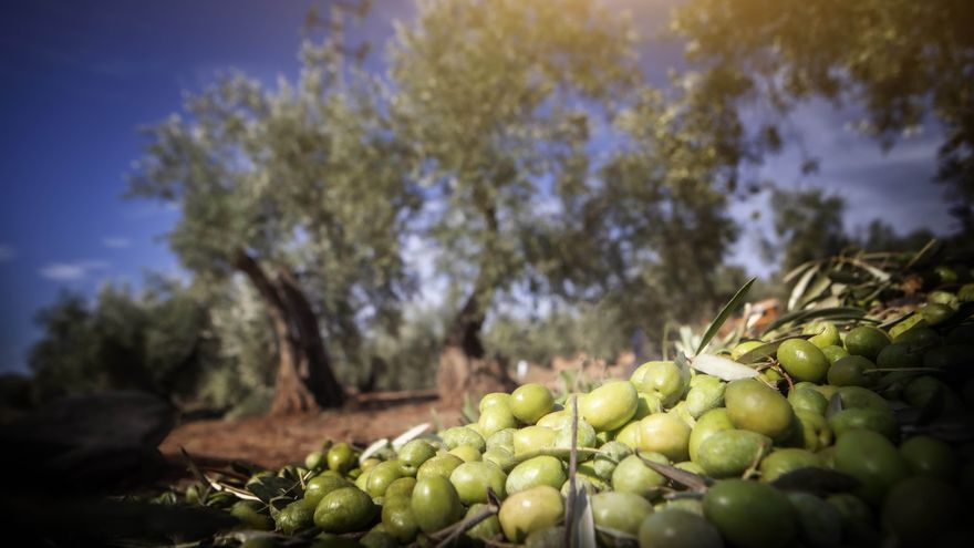 Un aceite de oliva del Mercadona, con dos medallas de oro