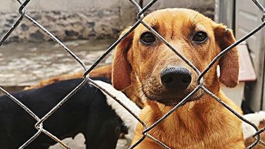 Torrevieja destina el dinero previsto para albergue animal al Palacio de Deportes