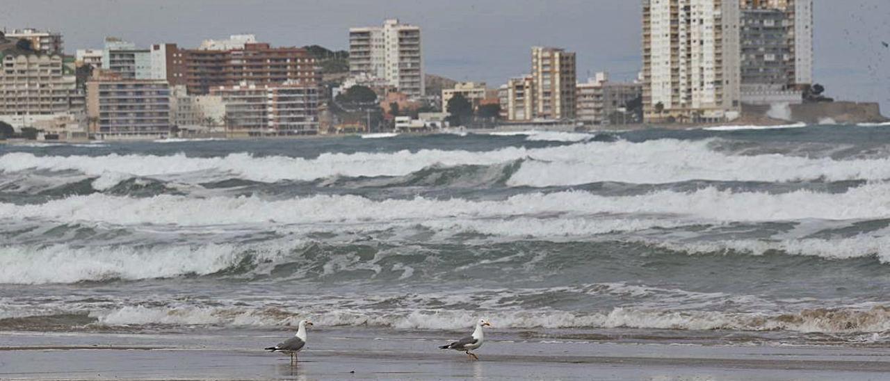 La playa de San Antonio, en Cullera, en una imagen tomada el miércoles, durante el temporal.