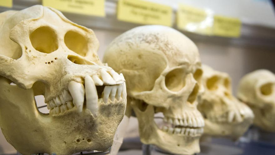 La mitad de los universitarios españoles no conoce la Teoría de la Evolución de Darwin