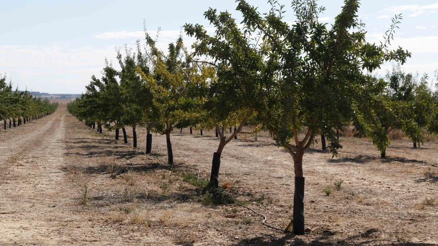Una jornada pretende mejorar la producción forestal en los minifundios de Zamora