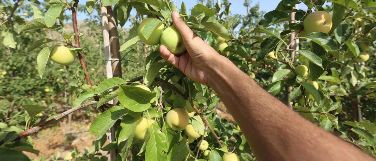 Imagen de archivo de recogida de manzanas.