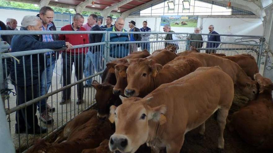 Los veterinarios cuestionan que se abran oficinas para facilitar la venta de terneros