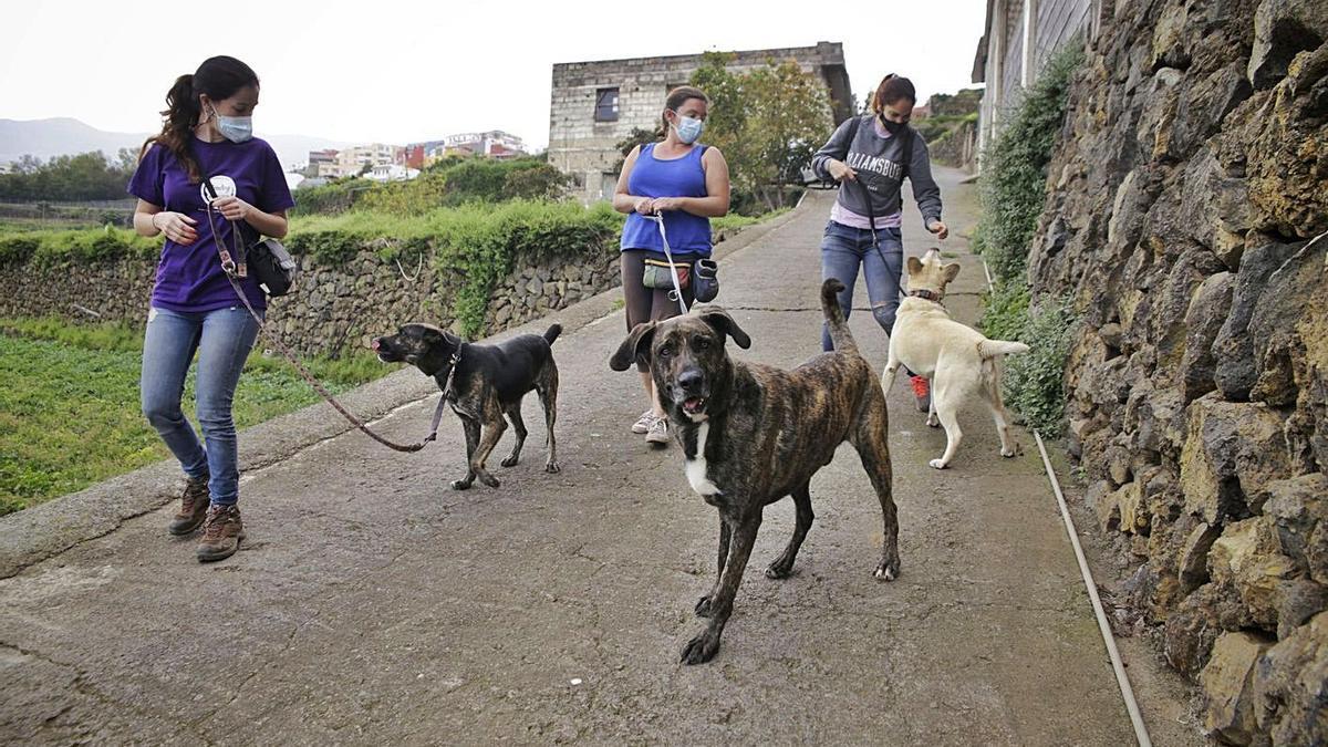 Adiestradores con mascotas en el norte de Tenerife.