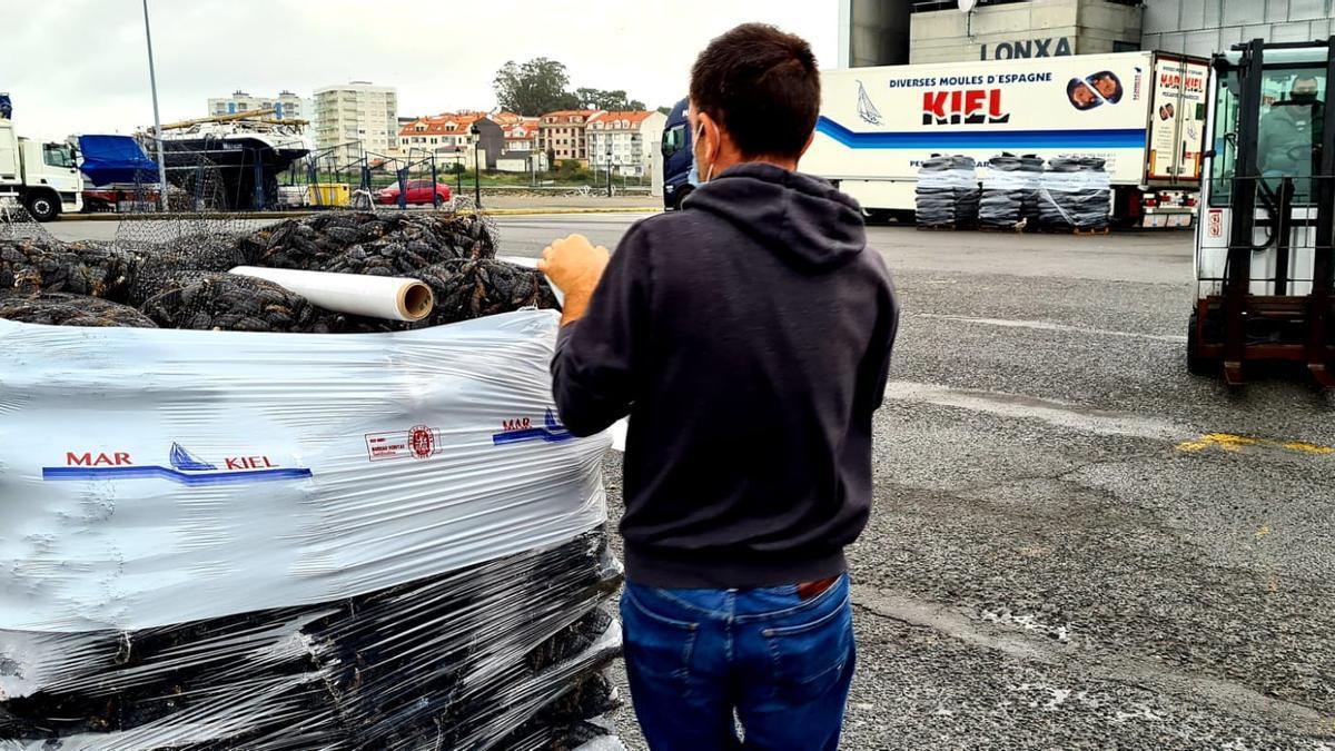 Preparación del molusco para su envío a Francia a través de la empresa Mar Kiel, de Vilanova.