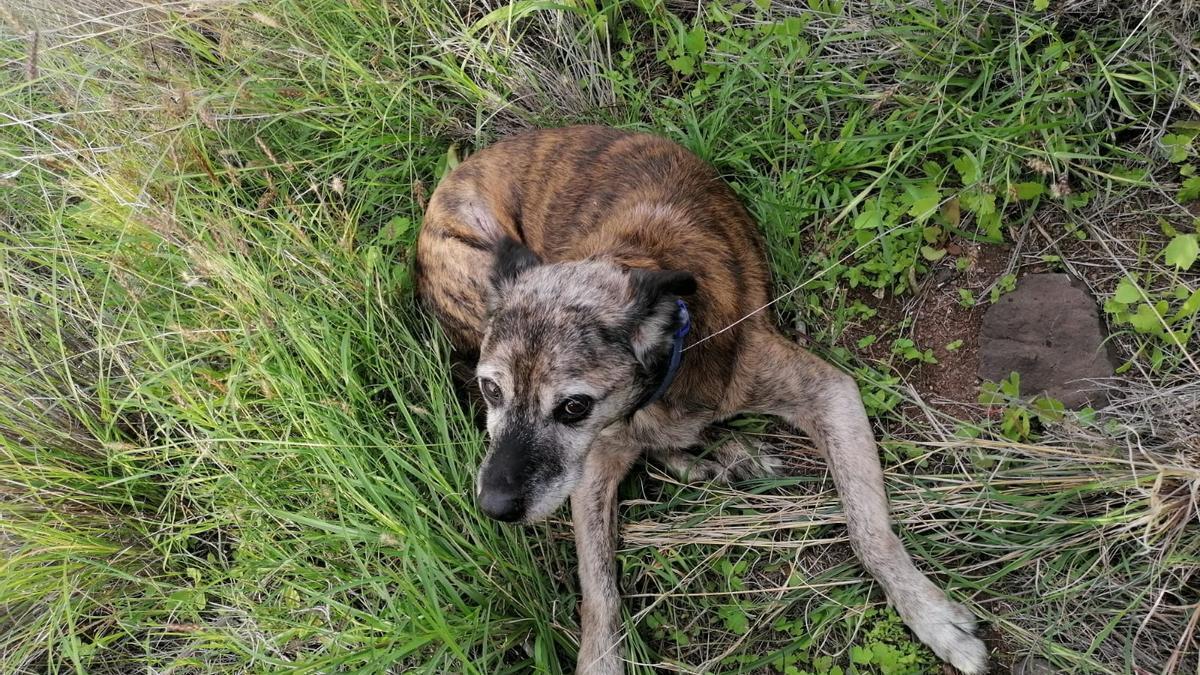 Rescate del perro atropellado en El Suculum