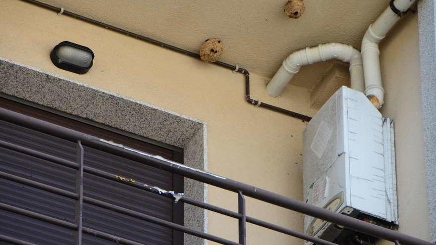 Moaña critica la tardanza y descoordinación para retirar un nido de velutina en el centro