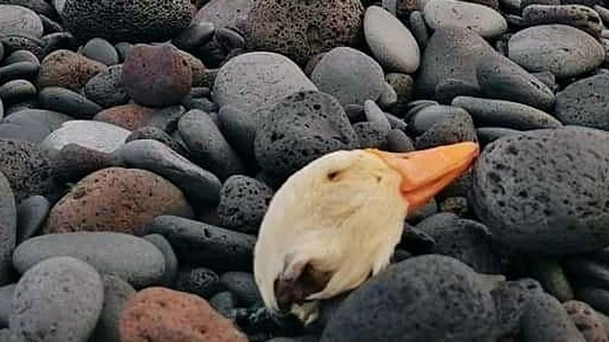 """La santería """"se visibiliza"""" en la Isla entre el rechazo a los sacrificios de animales"""