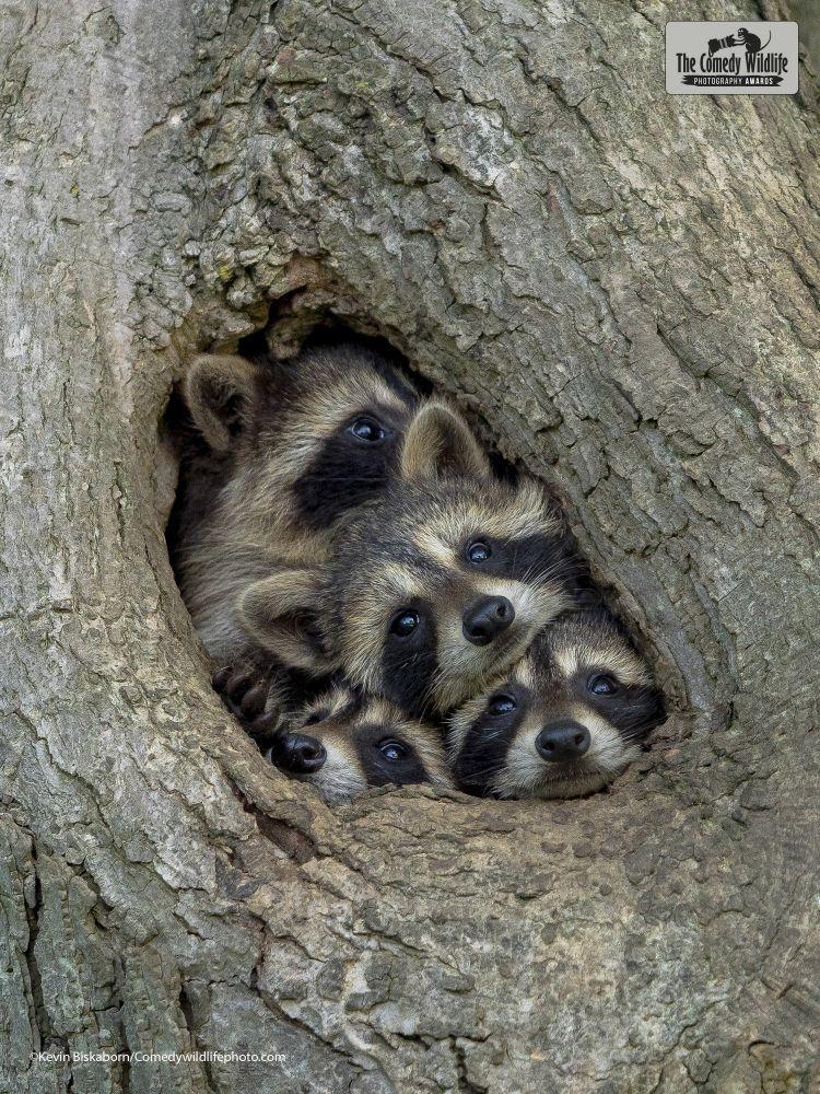 fotos-divertidas-animales-9.jpg