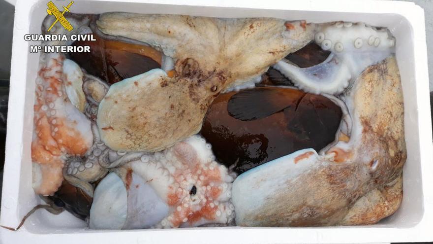 Arrestan a dos pescadores furtivos con 55 kilos de pescado en Cabo Tiñoso