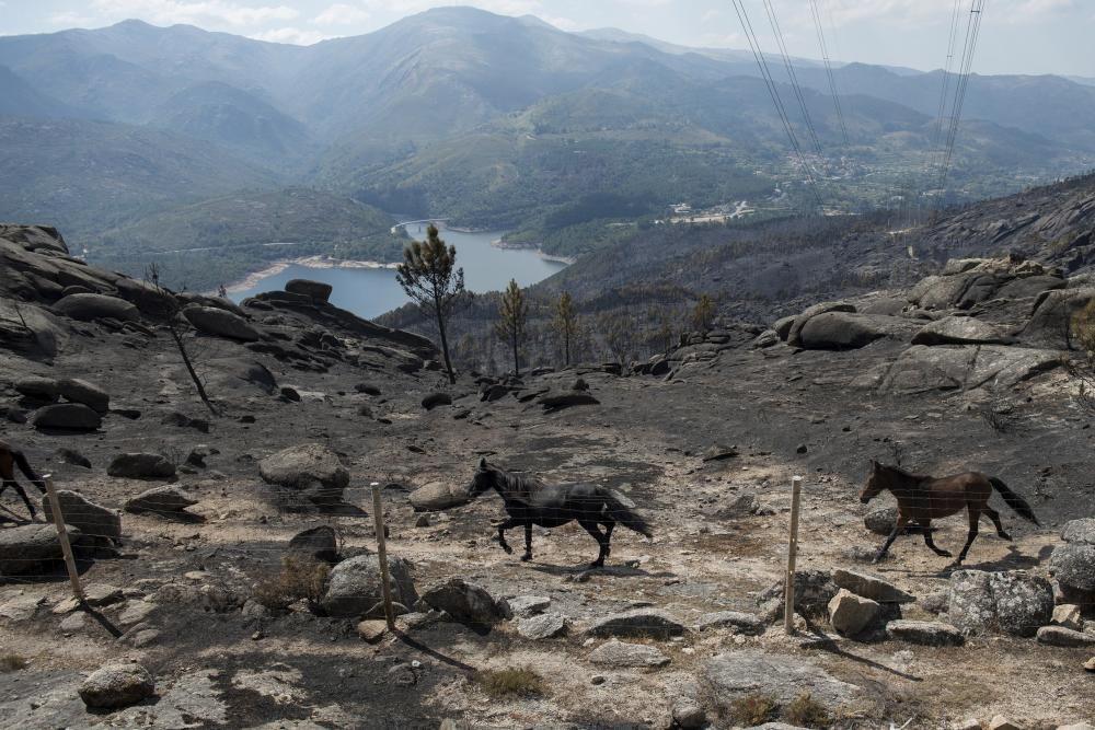Entrimo, el incendio más voraz del año en Galicia