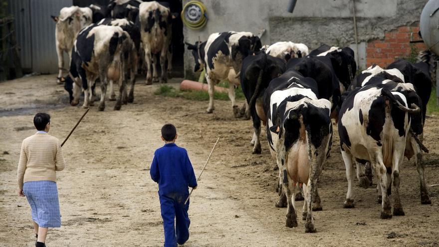 El nuevo alumbrado de la zona rural de Vegadeo se lleva buena parte del presupuesto local