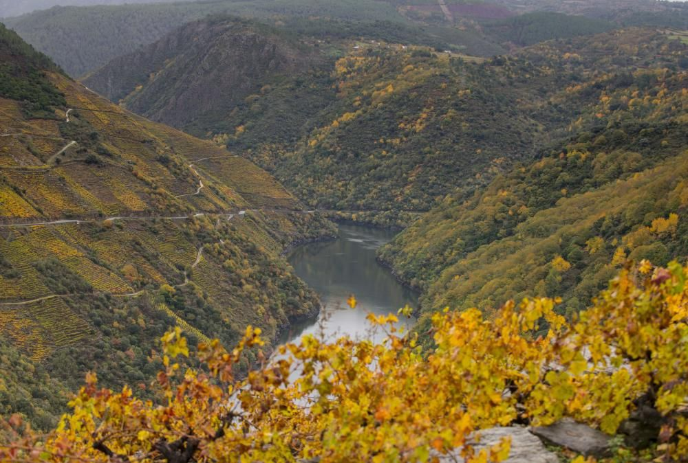 La Ribeira Sacra luce estos días unos hermosos colores otoñales // Brais Lorenzo