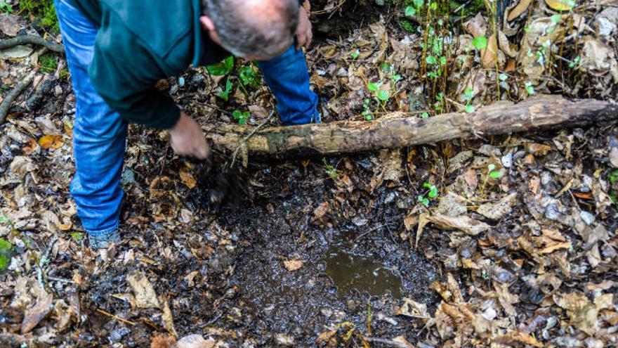 El proyecto europeo Life-Nieblas recupera la antigua Selva de Doramas