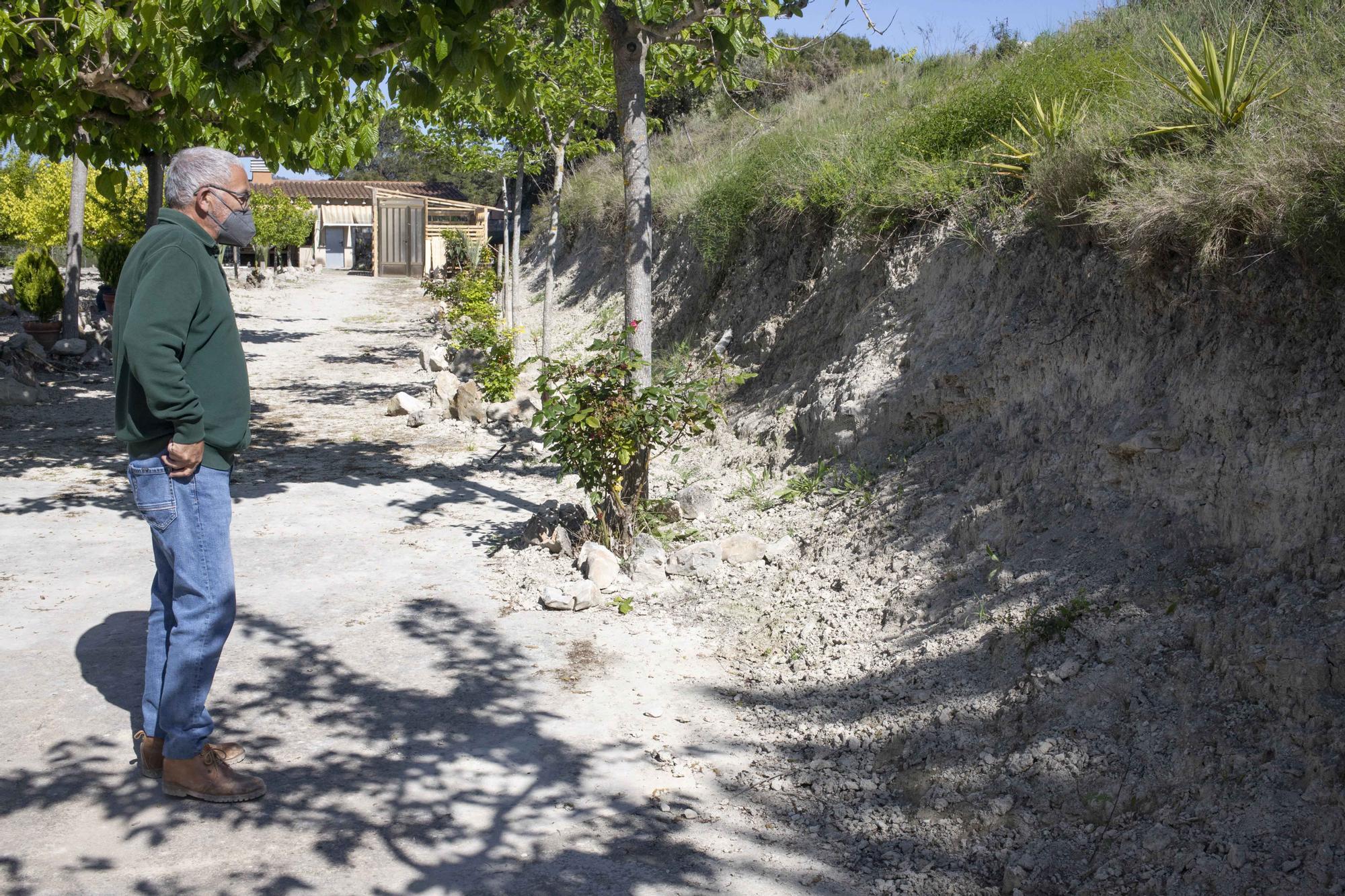 Los jabalíes destrozan parcelas de la urbanización Bixquert