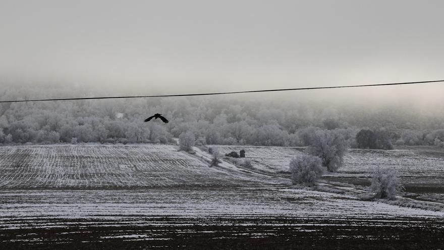 GALERÍA | Paisajes de una Zamora escondida entre la niebla