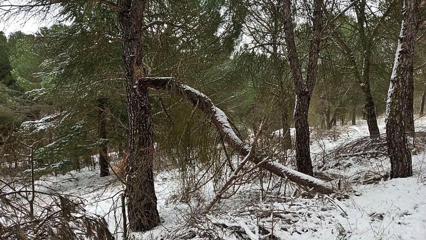 El PSOE de Zamora pide la retirada de árboles caídos en Valorio tras el temporal de 2018