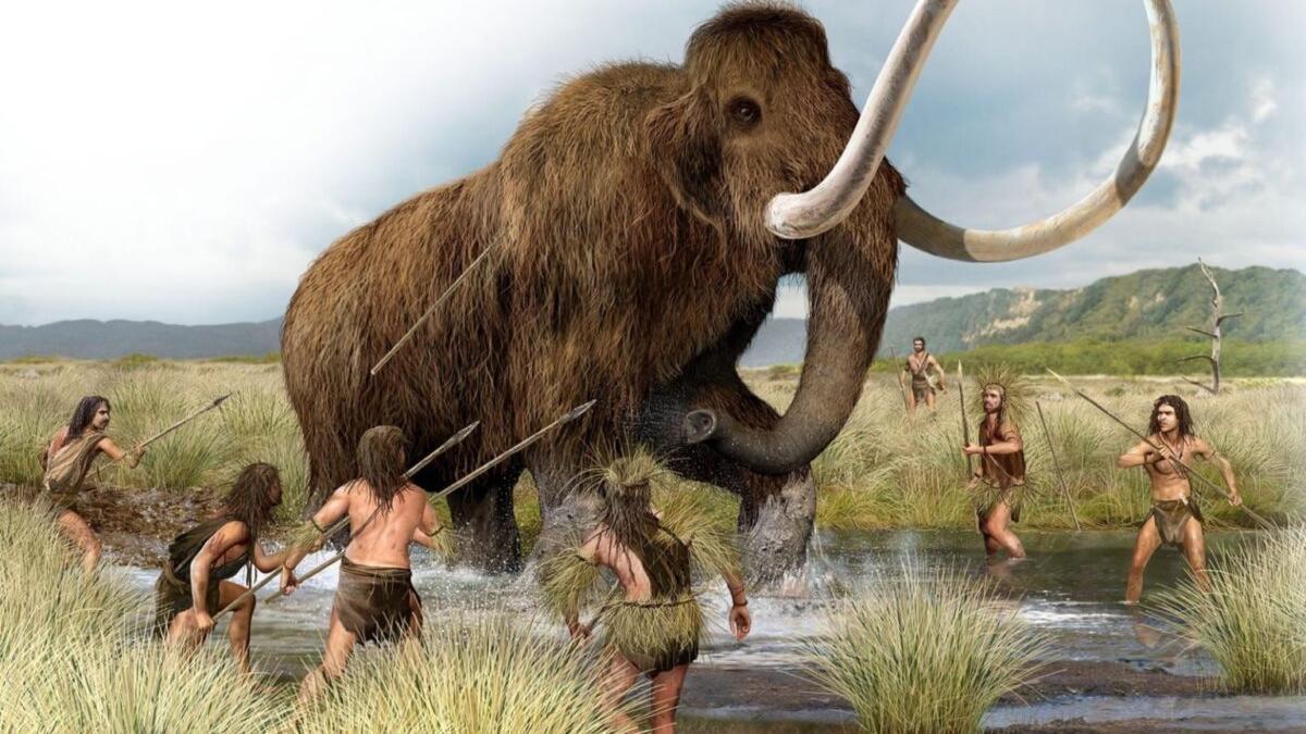 Científicos genéticos de EE UU quieren 'revivir' un mamut antes de seis años