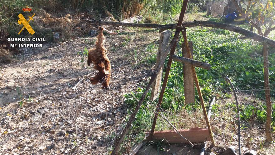 El Seprona investiga a dos personas por la muerte de un lince ibérico en Villafranca de Córdoba