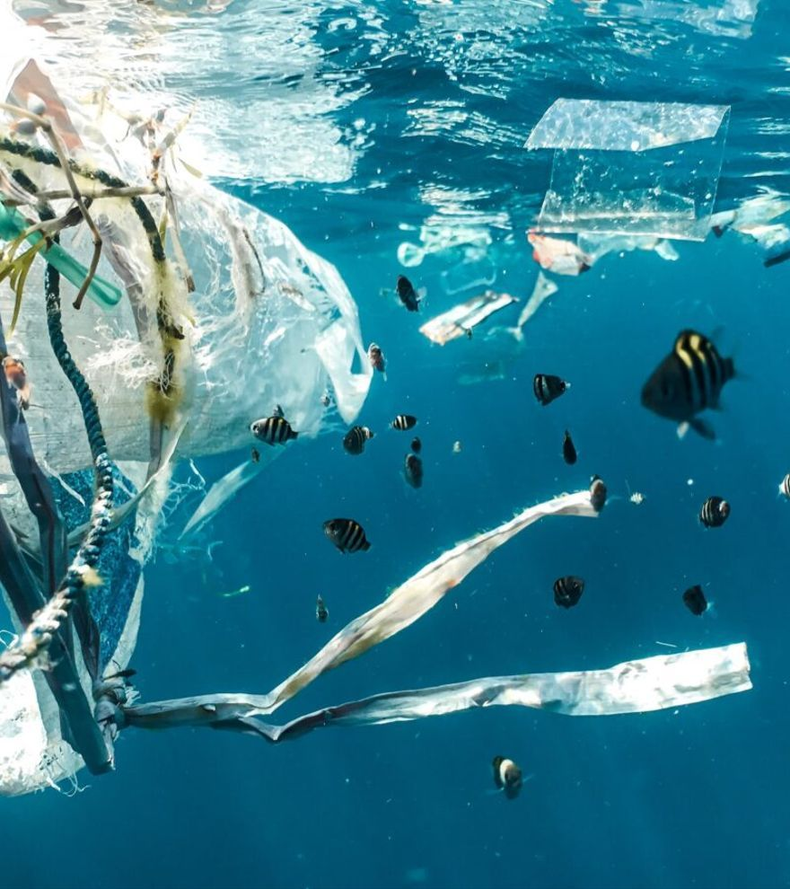 Los microplásticos ahogan los océanos: ya contaminan la Antártida